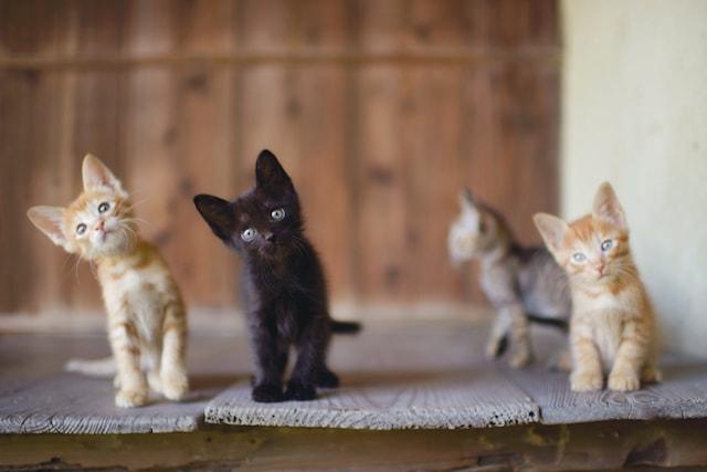 台湾の子猫たち by ねこ写真家・関由香