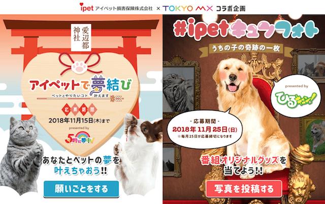 TOKYO MXの番組で始まる新コーナー「アイペットで夢結び」と「#ipetキュンフォト」
