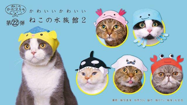 キタンクラブのカプセルトイ、猫用のかぶりもの「かわいい かわいい ねこの水族館2」