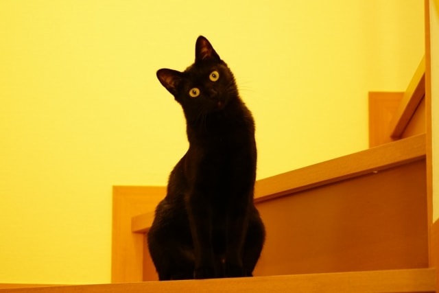 黒猫のイメージ写真