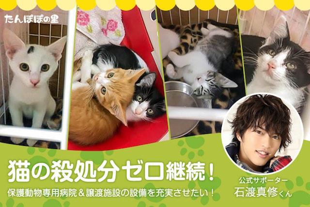 石渡真修さんが公式サポーターに就任、保護猫活動をしている「たんぽぽの里」によるクラウドファンディング