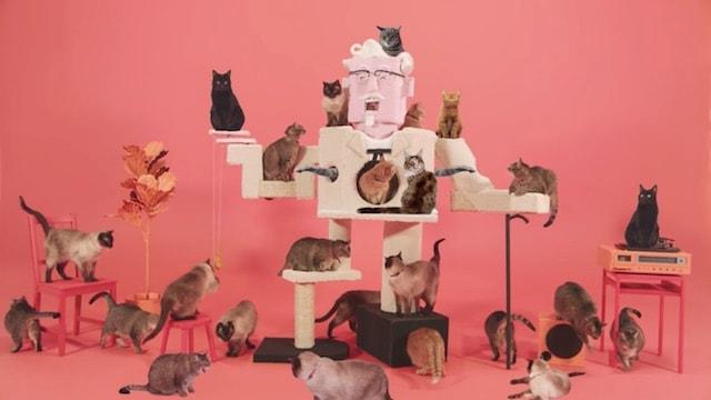 カーネル・サンダースのキャットタワーに登るたくさんの猫たち