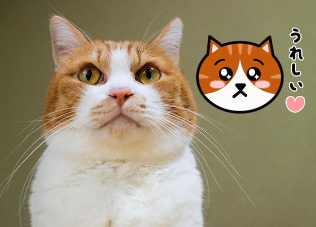 「かわいい猫の顔」のLINEスタンプ