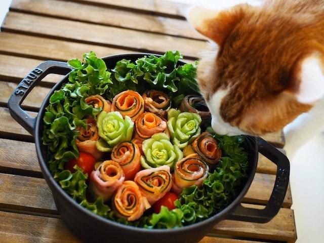 猫も人間も食べれる「あじの刺身と彩り野菜のキヌアサラダ」