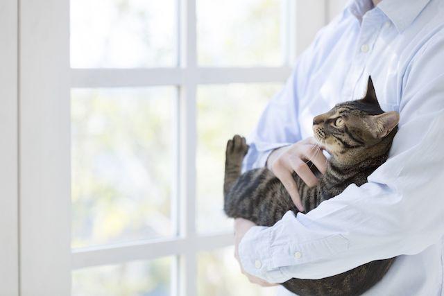 猫と人が快適に心地よく、健康的に過ごすためのリノベーション「マイリノペットforねこ」