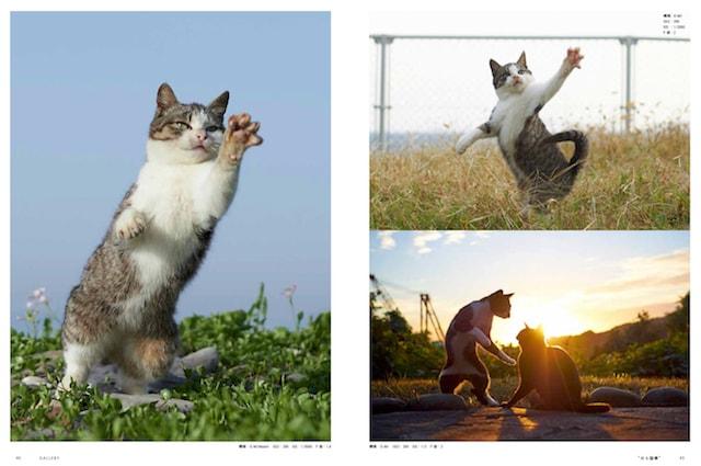 拳法家のような佇まいの猫の写真 by ねこ拳撮影術