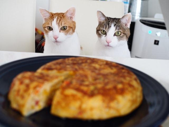 美味しそうなキッシュを見つめる2匹の猫