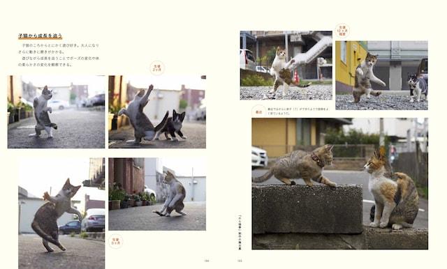 写真集「のら猫拳」の制作エピソード by ねこ拳撮影術
