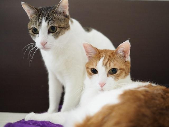 五月女圭紀さんの愛猫2匹