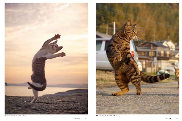 「ねこ拳」の手練猫 by ねこ拳撮影術