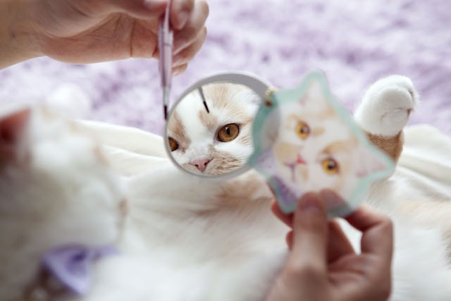 ミラーに写る猫のホイップ