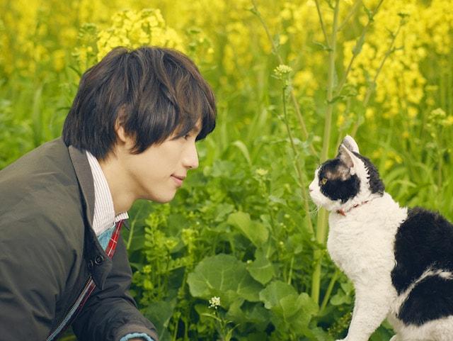 福士蒼汰主演の映画「旅猫リポート」カナダで行われる国際映画祭に出品決定