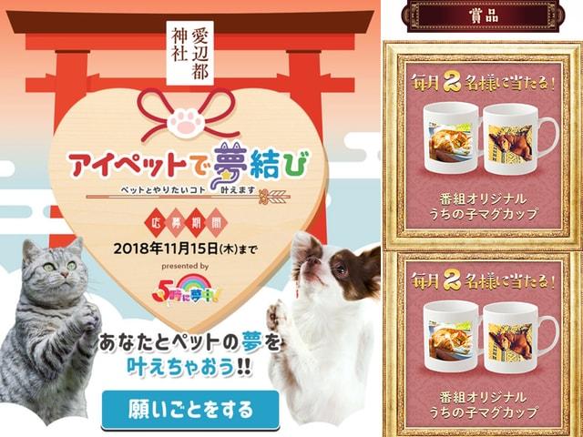 TV番組「5時に夢中」と「ひるキュン」で愛猫&愛犬家向けのコーナーが放送開始