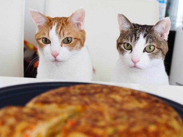 愛猫と同じ釜の飯を食べる!24のレシピ本「お取り分け猫ごはん」