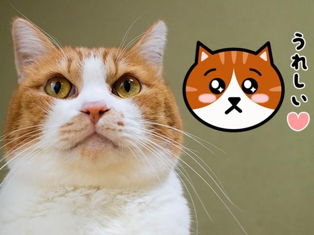 LINEスタンプに「かわいい猫の顔」シリーズが登場!14種類の模様から選べるニャ
