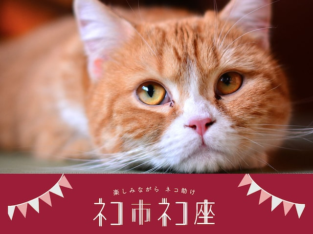 日本最大級の保護猫イベント「ネコ市ネコ座」が東京ドームシティで開催