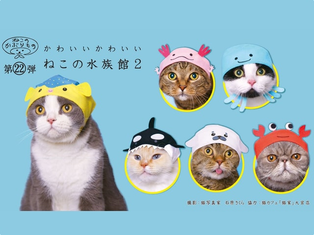 愛猫がカニやクラゲに変身!猫のかぶりものシリーズに水族館の第2弾が登場