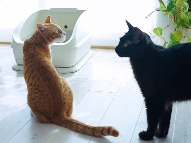 愛猫の体調変化を監視するスマート猫トイレ「toletta」の販売価格が公開