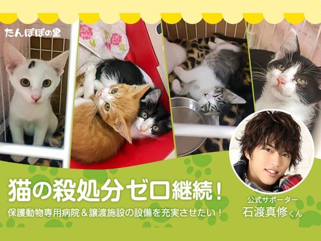 俳優・石渡真修さんも協力、保護猫シェルターが新病院開設に伴う支援を募集中