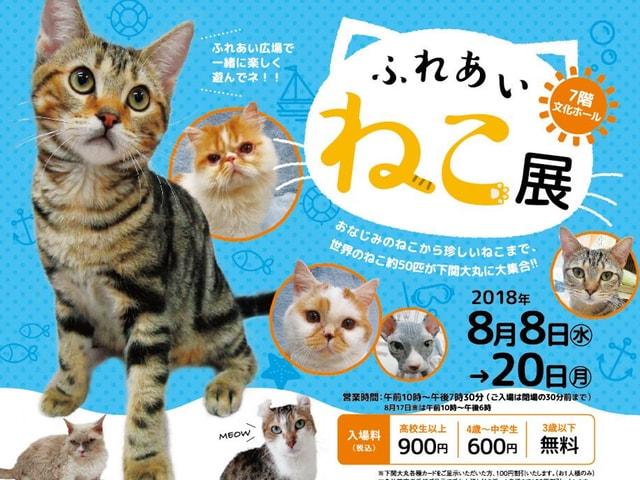 世界中の珍しい猫と触れ合える「ふれあいねこ展」が山口県の下関大丸で開催