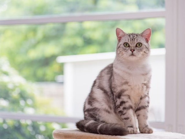 獣医学博士監修、愛猫と快適に暮らすためのリノベーションサービス「マイリノペットforねこ」