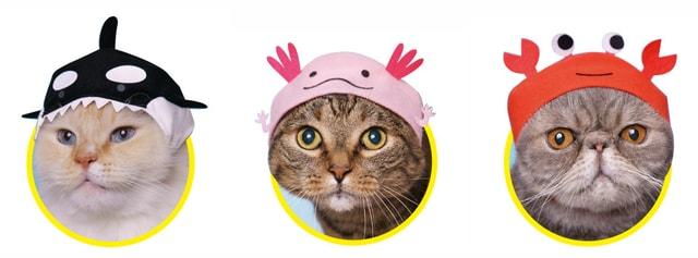 猫に「ねこの水族館2」をかぶってもらったイメージ