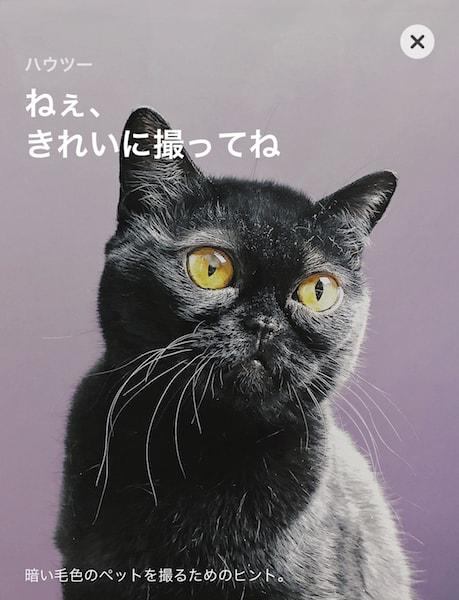 App Storeの猫を上手に撮影するコンテンツ