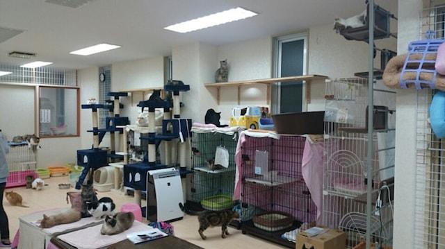 たんぽぽの里が運営する保護猫シェルターの室内