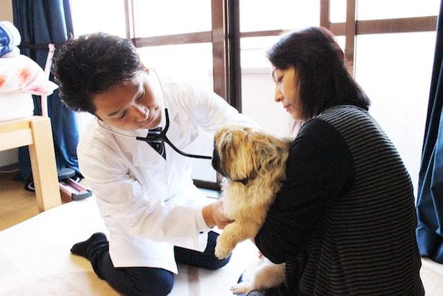 往診専門獣医療サービス「わんにゃん保健室」の診察イメージ