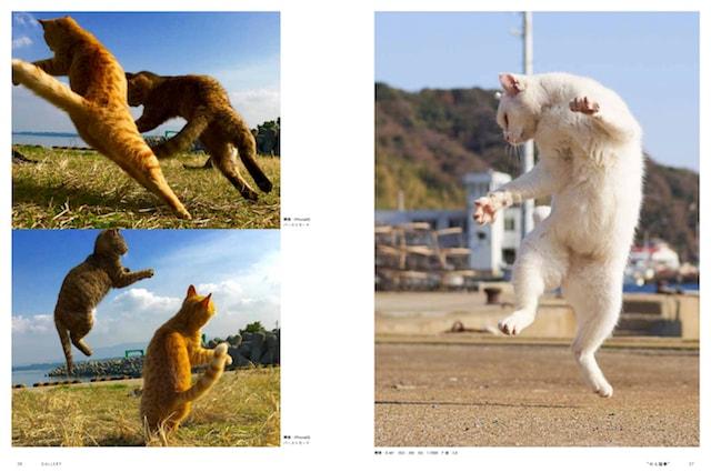 久方広之さんによる「のら猫拳法」の写真
