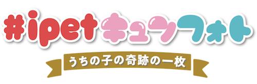 「ひるキュン!」で放送される新コーナー「#ipetキュンフォト」