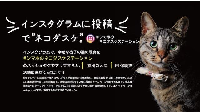 インスタを幸せな猫で埋め尽くして猫を救うネコダスケステーション