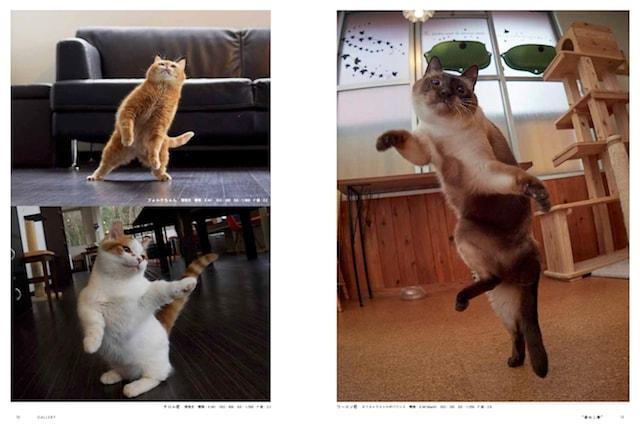 室内の猫を被写体に撮影したアクロバティックな猫「ねこ拳」の写真
