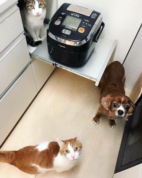 猫2匹と犬の共同生活