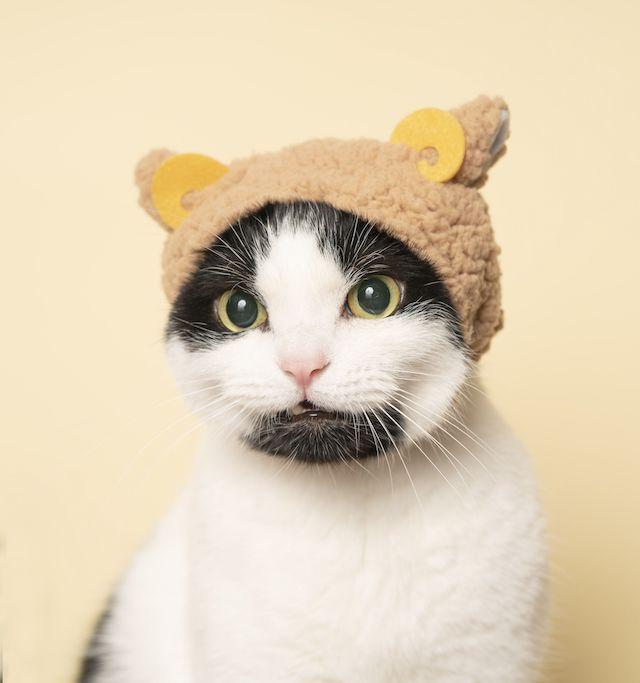 ねこのかぶりもの(ひつじ)を被る白黒猫 by 石原さくら