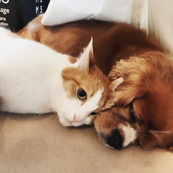 猫と犬が仲良くお昼寝