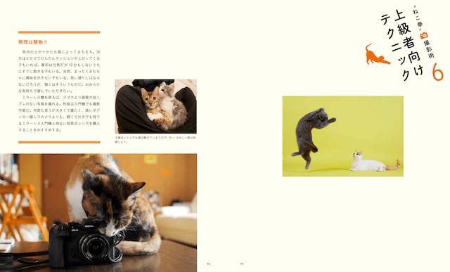 上級者向けの猫テクニックを解説 by ねこ拳撮影術