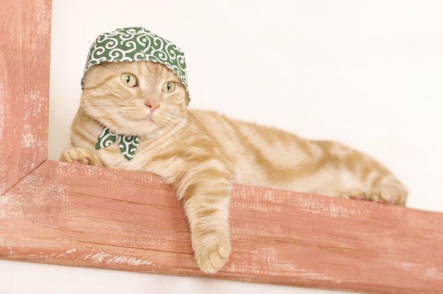 ねこのかぶりもの(泥棒)を被る茶トラ猫 by 石原さくら