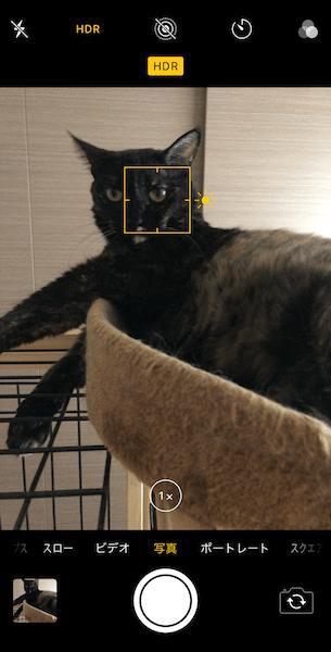 黒系の猫をiPhoneのカメラでHDRで撮影したイメージ