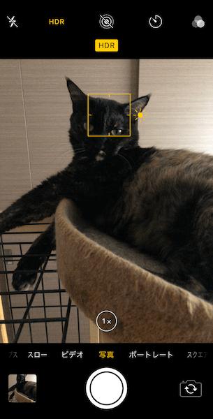 柔らかい光とHDRで黒系の猫を撮影 by iPhoneカメラアプリ