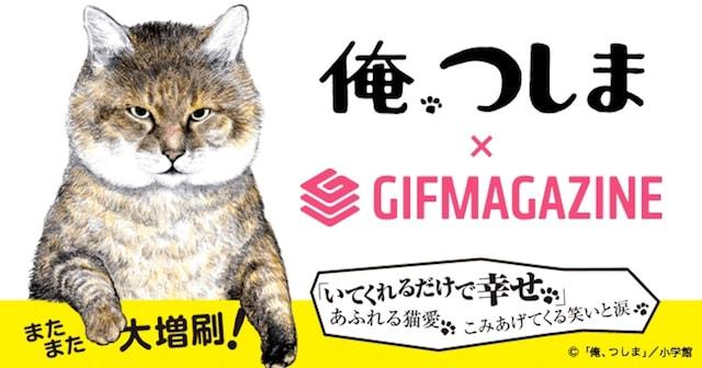 GIFMAGAZINEに猫マンガ「俺、つしま」の公式チャンネルがオープン
