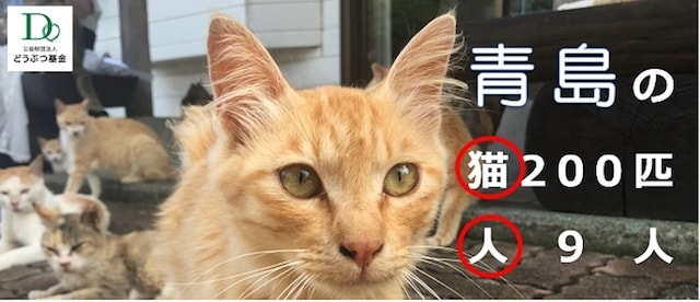 公益財団法人どうぶつ基金が青島で猫の出張TNR不妊手術を実施