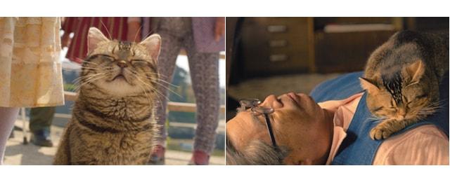 映画「ねことじいちゃん」の作中映像シーン