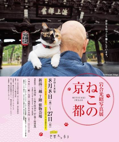 岩合光昭 写真展「ねこの京都」in 新潟三越のポスター