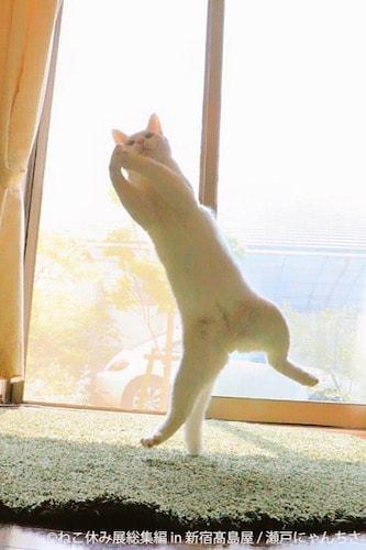 重力を物ともしない無重力猫「ミルコ」