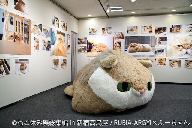 RUBIA-ARGYが制作したしょんぼり顔の人気猫・ふーちゃんの巨大ぬいぐるみ