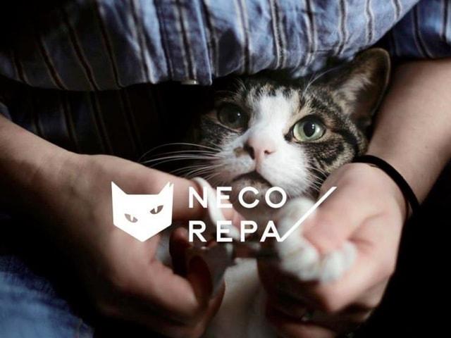 猫に優しいアパレル雑貨ブランド「NECOREPA(ネコリパ)」が誕生