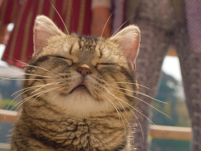 眠そうな猫の表情 by 岩合光昭さんの初監督映画「ねことじいちゃん」のワンシーン