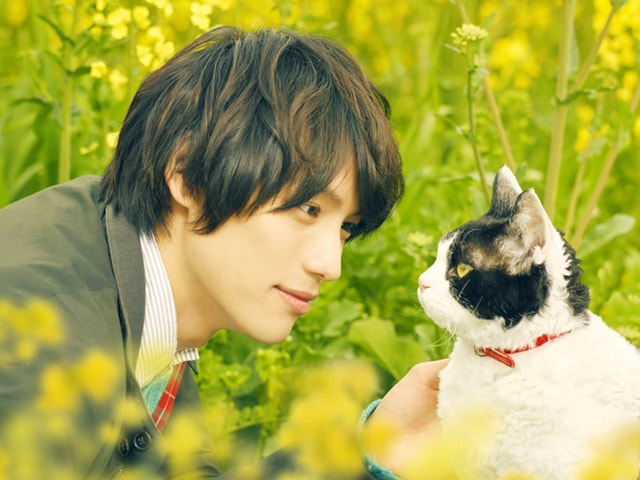 映画「旅猫リポート」カナダの国際映画祭で人気投票による銅賞を受賞