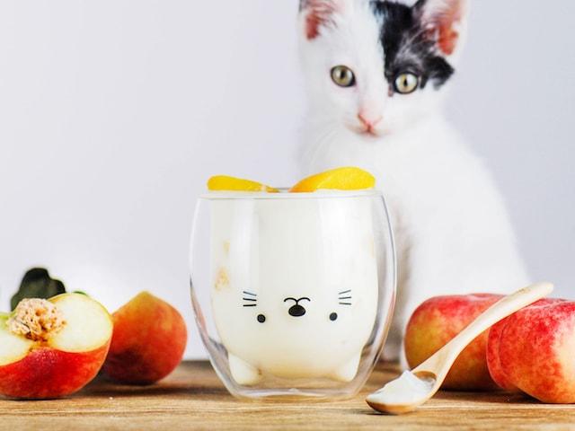猫デザインのダブルウォールグラス「GOODGLAS」を後ろから見つめる白黒猫
